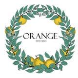 Runder Kranz von Blättern und von orange Frucht Rahmen-Skizzenart des Vektors Hand gezeichnete Nette Vögel eingestellt Logoschabl Lizenzfreie Stockfotos