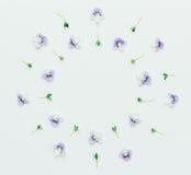 Runder mit Blumenrahmen von kleinen blauen Blumen auf einem weißen Hintergrund mit Raum für Text Lizenzfreies Stockbild