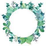 Runder Rahmen des Aquarells des Eukalyptus, dekorative Nessel, Minze lizenzfreies stockbild