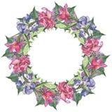 Runder Rahmen des Aquarells stellte mit rosa Tulpen- und Irisblumen ein Stockfoto