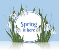Runder Rahmen des Frühlinges mit Schneeglöckchen Stockfotos