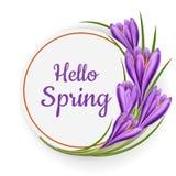 Runder Rahmen für Frühling mit Krokusblume Lizenzfreie Stockfotografie