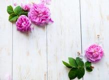 Runder Rahmen gemacht von den rosa Rosen, grüne Blätter, Niederlassungen auf weißem Hintergrund Flache Lage, Draufsicht Stockbilder
