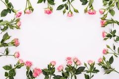 Runder Rahmen mit rosa Blumenrosen knospt, verzweigt sich und die Blätter, die auf weißem Hintergrund lokalisiert werden Lage fla Stockfoto