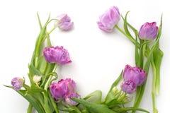 Runder Rahmen mit Tulpenblumen Flache Lage Beschneidungspfad eingeschlossen Lizenzfreie Stockbilder
