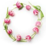 Runder Rahmen mit Tulpenblumen Flache Lage Beschneidungspfad eingeschlossen Stockfotografie