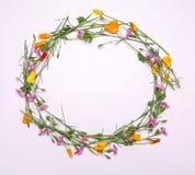 Runder Rahmen von empfindlichen Blumen Frühlingsgelb, Purpur, rosa Blumen auf weißem Hintergrund Stockfotografie