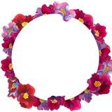 Runder Rahmen von fantastischen Blumen mit Rosa und roten Blumenblatt-, Blauen und violettenschatten, stockfotos