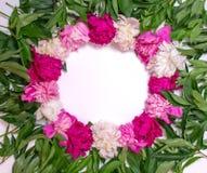 Runder Rahmen von Pfingstrosen auf einem weißen Hintergrund Blumenauslegung? Hintergrund, Hintergrund, Auslegung der Abbildung Ro Stockfotografie