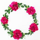 Runder Rahmen von roten Pfingstrosenblumen und -blättern auf weißem Hintergrund Flache Lage, Draufsicht stockbild