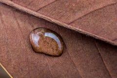 Runder Wassertropfen der Nahaufnahme auf einem Blatthintergrund lizenzfreies stockbild