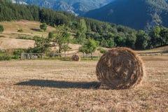Rundes Alpaka stockfoto