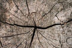 Rundes Baum structureTree Ring backgroundRound grundlegendes texturesw stockbild