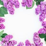 Rundes mit Blumenmuster der purpurroten Flieder und des Grüns verlässt auf weißem Hintergrund Flache Lage, Draufsicht Sommermuste Stockfoto