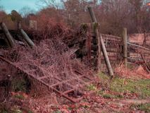 Rundown fence with overgrown weeds on a cattle farm. These cattle stall fences have become rundown and are now overgrown by weeds on a farm in Tennessee Royalty Free Stock Image