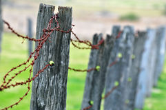 Rundown old rustic post barb wire fence Stock Photography