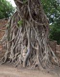 Rundresa Thailand juli 2017 - Ayutthaya - Wat Maha That Royaltyfri Bild