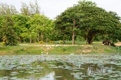 Rundresa Thailand juli 2017 - Sukhothai Fotografering för Bildbyråer