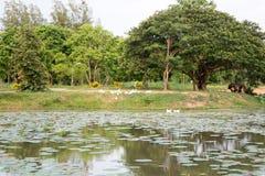 Rundresa Thailand juli 2017 - Sukhothai Arkivbild