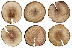 Rundschnitte eines Baumstammes Stockbilder