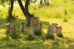 Rundtischstümpfe im Garten Lizenzfreies Stockbild