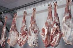 Rundvlees Royalty-vrije Stock Afbeeldingen