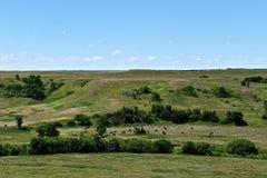 Rundvleeskudde het weiden in een vallei Royalty-vrije Stock Foto's