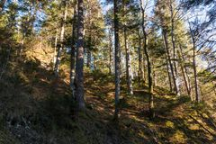 Rundweg, ίχνος πεζοπορίας γύρω από το Eibsee στο Zugspitze στη Βαυαρία στοκ εικόνα με δικαίωμα ελεύθερης χρήσης