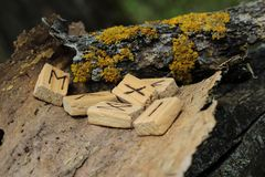 Free Runic Alphabet. Wooden Runes Lie On A Dry Bark From A Tree. Near Yellow Moss. The Concept Of The Element Royalty Free Stock Image - 146474766