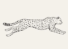 Runing leopard hand drawn. Runing leopard.Motion of predator.Hand drawn vector animal Stock Photography