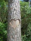 Runk con el corazón Foto de archivo libre de regalías