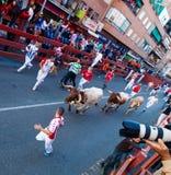Runnen van de Stieren stock foto's