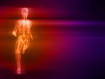 Runner. 3d rendered illustration of a running skeleton Royalty Free Stock Photo