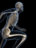 Runner anatomy Stock Photography