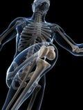 Runner anatomy Royalty Free Stock Photo