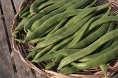 Runner beans on garden table detail Royalty Free Stock Images