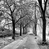 Runner in fog. Artistic look in black and white. Royalty Free Stock Image