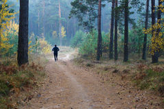 Runner in the forest Royalty Free Stock Photography
