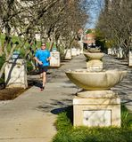 Runner at Fountain Row at Elmwood Park, Roanoke, Virginia, USA. Roanoke, Virginia USA – Nov. 17th: A male runner out for a morning run at fountain row royalty free stock photo