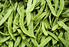 Runner Green beans Royalty Free Stock Images