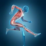 A runner pose. Medically accurate 3d illustration of a runner pose stock illustration