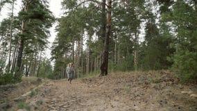 A runner runs through a pine forest. stock video