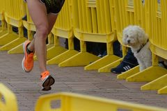 Runners and dog Stock Image