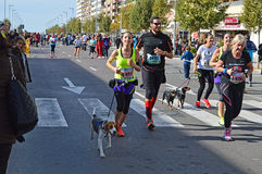 Runners With Dogs. Marathon running dogs and their owners Royalty Free Stock Photos