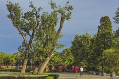 Runners in Herastrau park Stock Photo