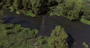 Runners in river in endurance race. Aerial footage 4K. Team of people starting to cross the river stock video footage