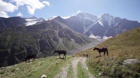 Runnig hästar på bergängen arkivfilmer