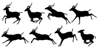 Running antelope. Set of editable vector silhouettes of running impala antelopes Stock Images