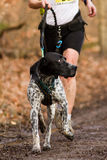 Running athlete. With a dog on a singletrail Stock Photo