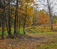 Running autumn Park Stock Photography